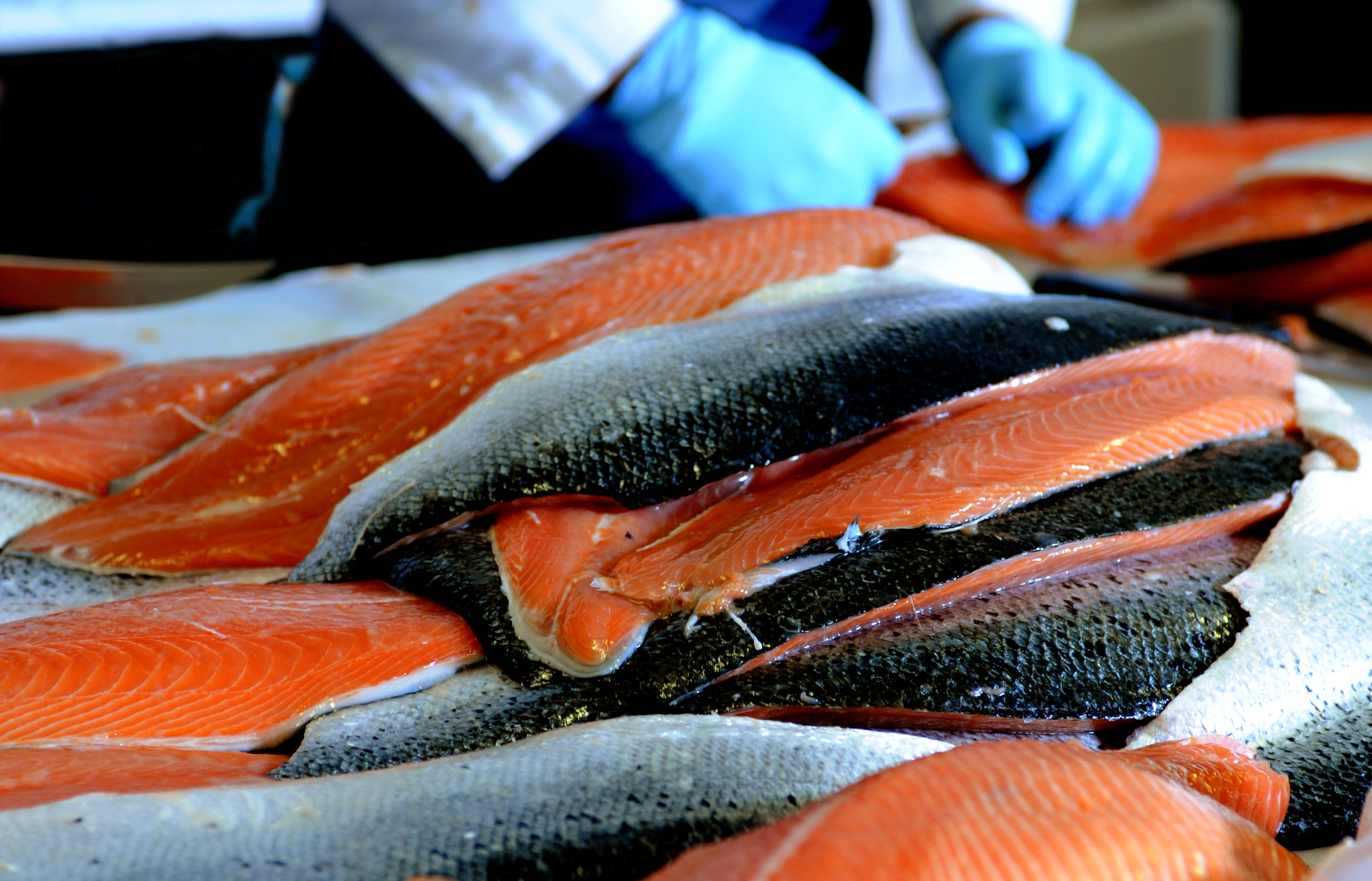 2015 salmon season northern fish northern fish for How to season fish